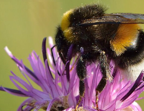 Beekeeping And Their Importance In The Ecosystem