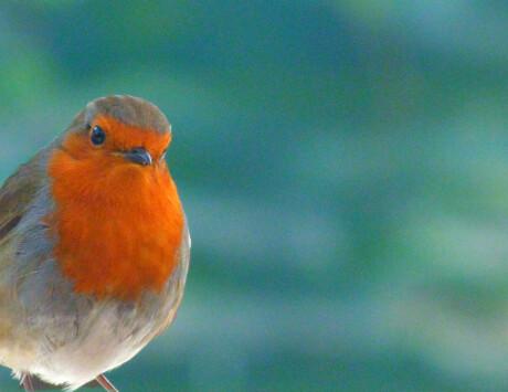 EY Workshop Little Bird