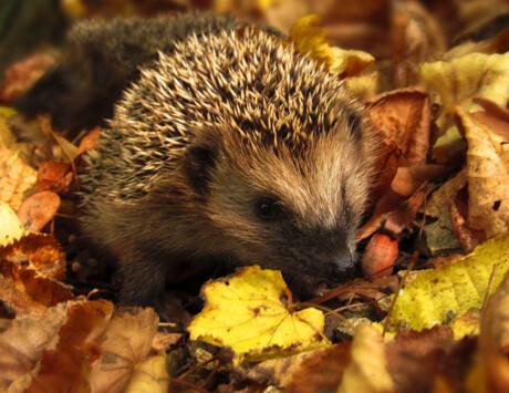 Howie The Hedgehog Seedlings At The Ark