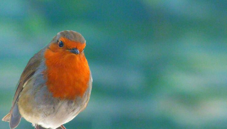 Early Years Workshop: Little Bird