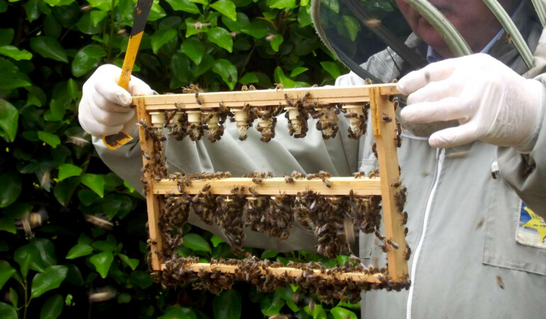 Talk for Grown-Ups: Beekeeping and their Importance in the Ecosystem