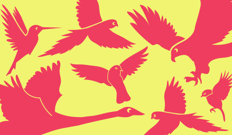 Visual Art Video Workshop: Flap, Glide and Soar like a Pigeon