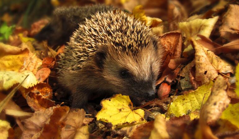 Seedlings Workshops: Howie Hedgehog Needs a Home