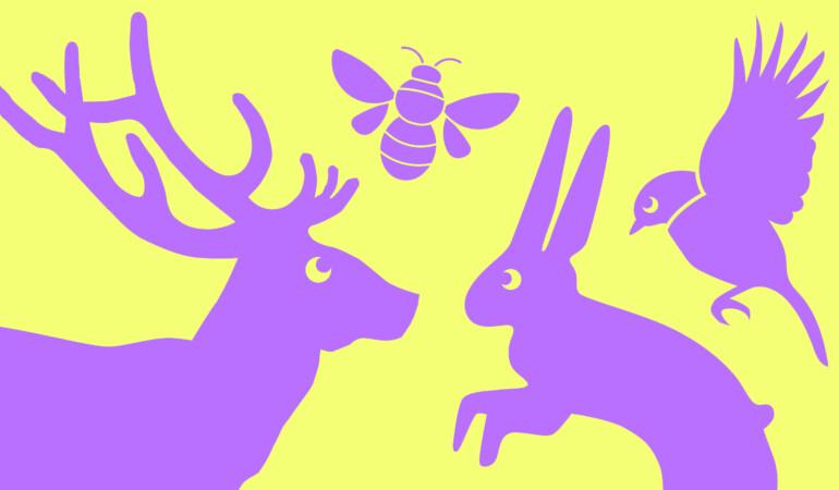 Culture Night: Animals as Messengers, Guides & Fairies - Visual Art Video Workshop
